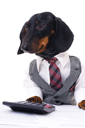 portrait of a business dachshund wearing a suit and tie, isolated over white
