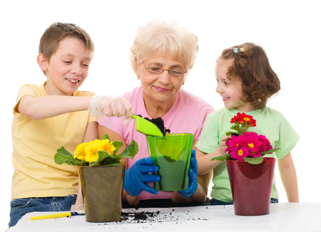 primrose: grandmother with grandchildren planting flowers into the flowerpot, isolated over white