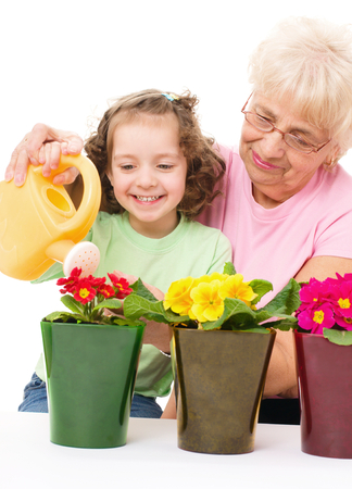 primula: grandmother with granddaughter watering flowers in the flowerpots, isolated over white