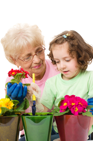 primula: grandmother with granddaughter planting flowers into the flowerpots, isolated over white