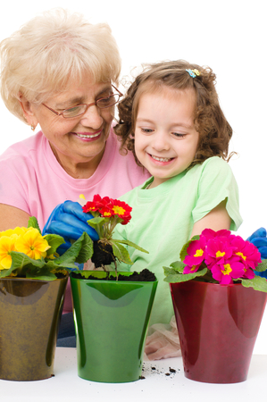 primula: grandmother with granddaughter planting flowers into the flowerpot, isolated over white