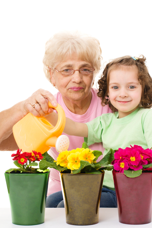 primula: Gardening, planting - grandmother with granddaughter watering flowers in the flowerpots, isolated over white