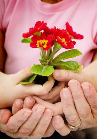 Gardening, planting concept. Hands holding flower Фото со стока
