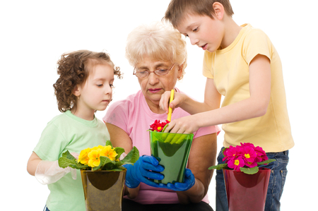 Gardening, planting - grandmother with grandchildren planting flowers into the flowerpot, isolated over white photo