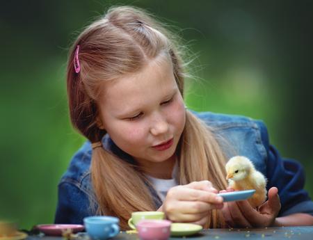 pollitos: Niña linda jugando con pollo al aire libre