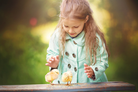 Cute little girl playing with chicken outdoors