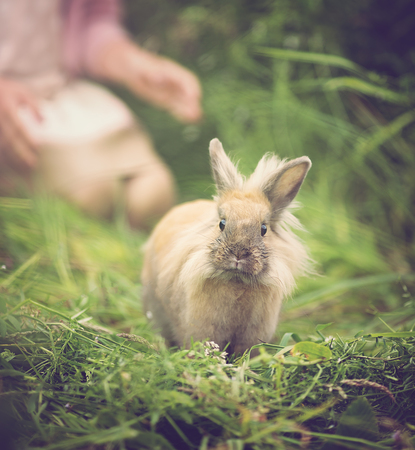 animal ear: Cottontail bunny rabbit running in the garden Stock Photo