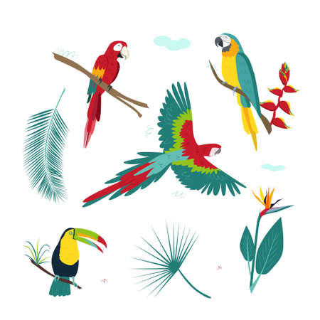 A set of tropical colorful parrots, plants, bright flowers. Modern vector illustration on a white background Ilustración de vector