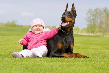 Little baby and big black Doberman together Stock Photo
