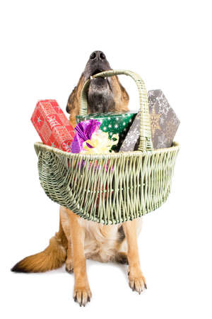 German sheepdog sitting with basket isolated over white backgroun