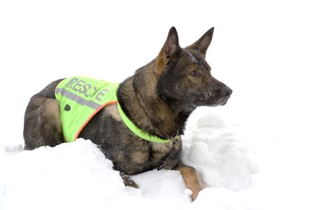 german sheepdog from rescue team Stock Photo