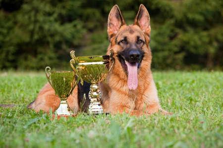 obey: perro alem�n con tazas sentar en la hierba