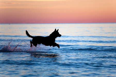 perro corriendo: Silueta de un perro que se ejecutan en agua contra el horizonte  Foto de archivo