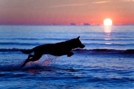 Silhouette of a dog running on water against sunset