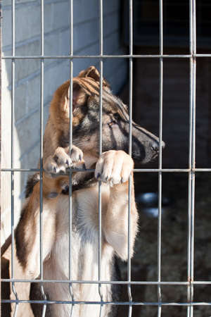 vacate: shepherd dog puppy in the pound
