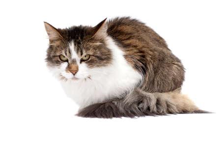 Boze kat geïsoleerd op witte achtergrond
