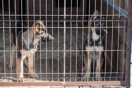 cachorros en el dogpound Foto de archivo