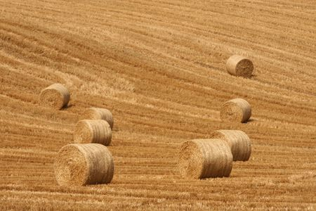 stubble and straw photo