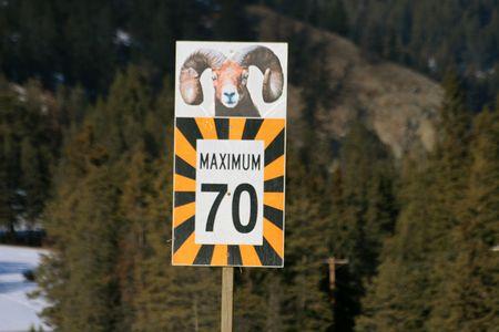mouflon: mouflon sign