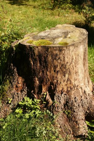 tree is cut Stock Photo - 7607334