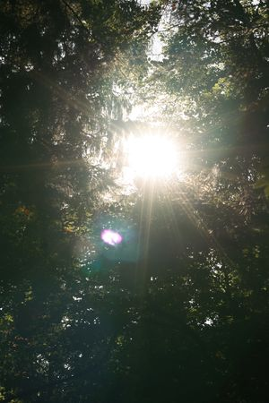 light abstract, forest Stock Photo
