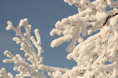 white tree abstract photo