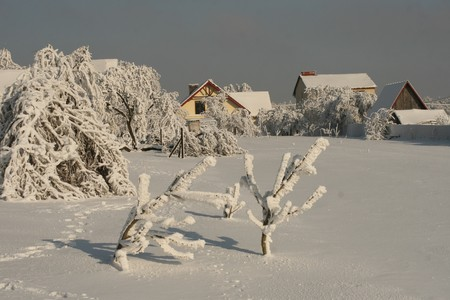 white winter photo