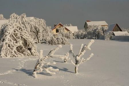 white winter photo
