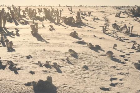 desert of the snow Stock Photo - 7560001