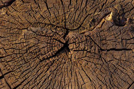 Wood texture. Wood background. Sectional tree.