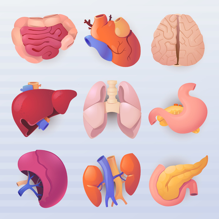 A set of realistic icons on the theme of biology. Icons of internal human organs.