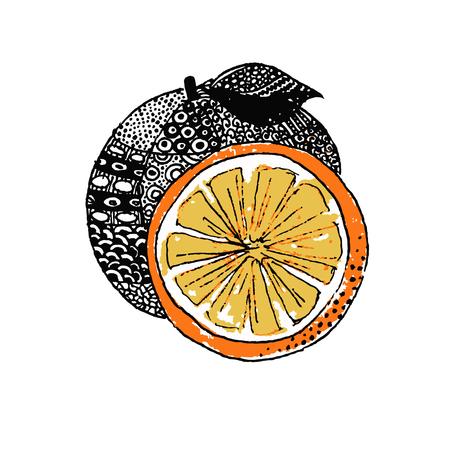 mandarin: Mandarin, vector illustration