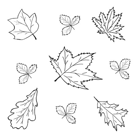 Foliage, vector illustration on your canvas
