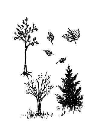 Trees and spruce, vector illustration for your design