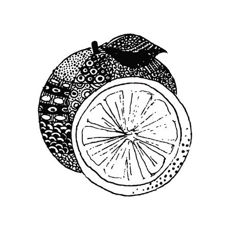 Mandarin, vector illustration on your canvas Ilustração