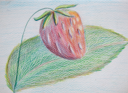 Strawberry, pencil illustration