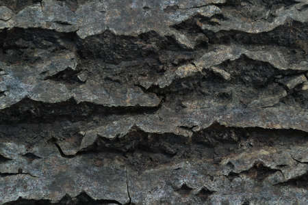 Tree bark close-up background. Close-up tree bark texture under soft lighting Banco de Imagens