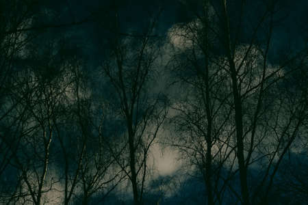 Gloomy mystical background from bare branches of trees and a gloomy dark sky