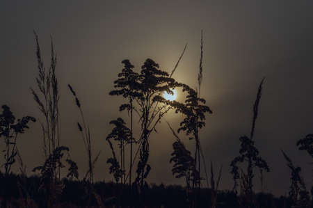 the sun at sunset through the stalks of dry grass. background sunset on nature meadows in light warm toning. Banco de Imagens