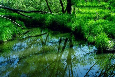 landscape lush green grass growing on marshland