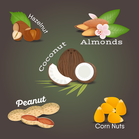 Set of Nut food grains and seeds. Coconut, almonds, hazelnut, peanut, corn nuts. Illustration in flat style.