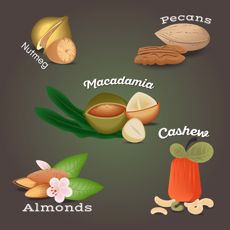 Set of Nut food grains and seeds. Nutmeg, macadamia, pecans, almonds, cashew. Illustration in flat style.