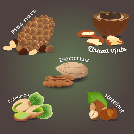 Set of Nut food grains and seeds. Pine nuts, brazil nuts, pecans, hazelnut, pistachios. Illustration in flat style.