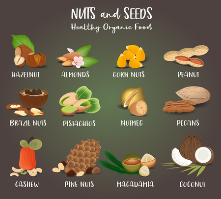 Set of Nut food grains and seeds. Coconut, almonds, hazelnut, peanut, corn-nuts, Nutmeg, macadamia, cashew, Pine-nuts, brazil-nuts pecans pistachios Illustration in flat style