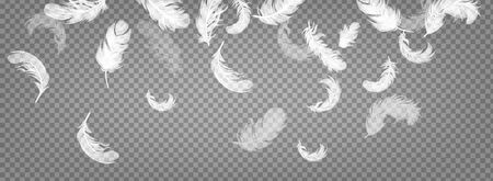 Realistic 3d white flying feathers on transparent background. Falling twirled fluffy realistic white swan. Vector illustration.