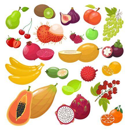 Fruit berrie set. Ripe papaya rambutan mangosteen dragon fruit lime pomegranate orange mandarin strawberry banana melon pear raspberry grape. Healthy organic tropic fruits berries, vector graphics.