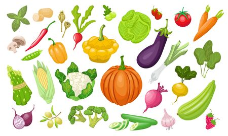 A large set of vegetables. Fresh tomatoes, peppers, pumpkin, paprika, zucchini, corn, carrots, peppers , peas, cabbage, broccoli. Vegeterian organic vector food in flat style. Farm healthy products.
