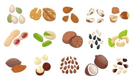 Nut seed set. Slices nuts pistachio peanuts brazilian hazelnut pumpkin seeds sunflower flaxseed almonds pecans cocoa beans mocadamia cashews coconut cedar. Organic color raw food vector. 矢量图像