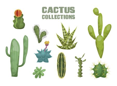 Desert cactus collection. Agave cactus striped leaf mexican peyote yellow flower green corifantha rebucia prickly mammillaria huge cereus lobivia round red inflorescence. Decorative vector flat. Иллюстрация