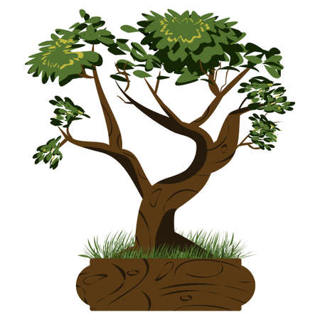 Bonsai tree. Japanese bonsai tree in the pot and with grass around. Plant icons isolated on white background. Asian plant. Detailed image. Vector 向量圖像